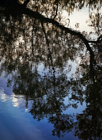 abstract background or texture reflection of a tree on the water Stock Photo
