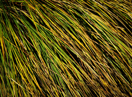 clump: abstract background or texture clump of grass