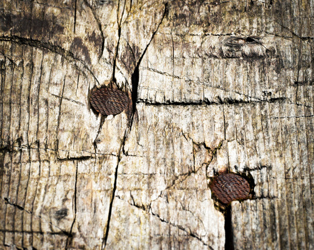 rusty nail: background or texture two rusty nails in wood Stock Photo