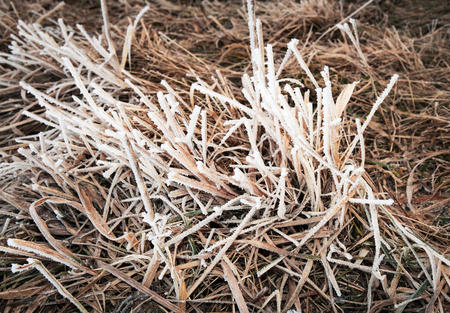 abstract seasonal background Dry grass with ice frost