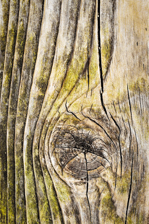 abstract background or texture knot in old wood board Stock Photo