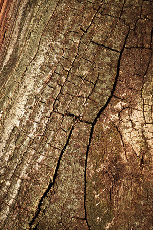 abstract background or texture old tree bark with cracks