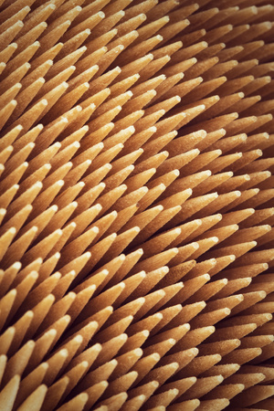 abstract background or texture Beech thin pointed needles