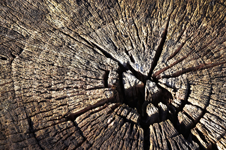 abstract background or texture Old dry stump Stock Photo