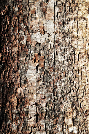 rot: abstract background or texture The structure of old decayed wood