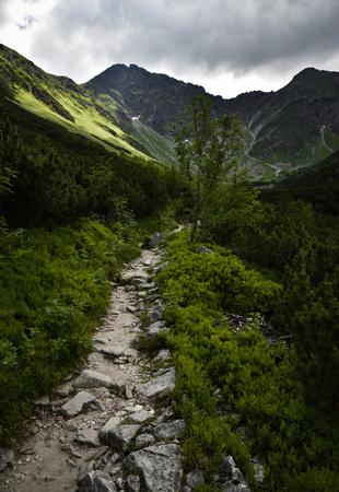 nature background Stone walkway mountain landscape 版權商用圖片