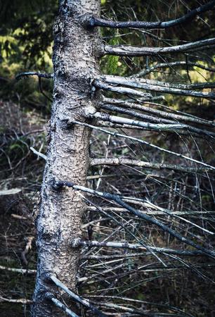 nature seasonal background weathered old tree