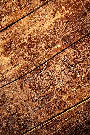 abstract background paths of beetles on old wood
