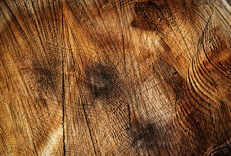 abstract background or texture groove on the cut of the wood