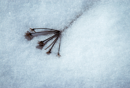 seasonal background Dry plant with melting snow