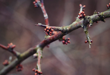 nature seasonal background blackthorn branch before blooming Stock Photo
