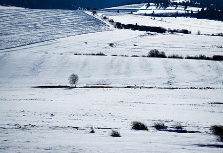 background detail on snowy fields and meadows