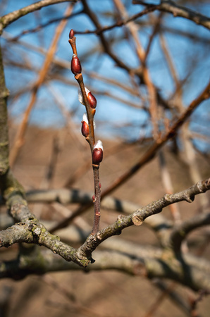 seasonal nature background spring willow twig