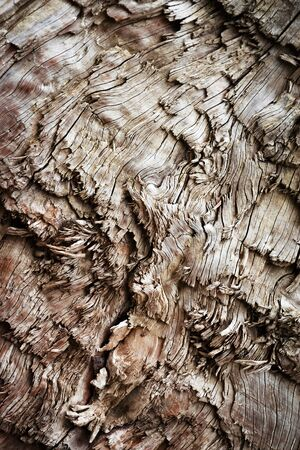 abstract background or texture detail of torn chopped wood Zdjęcie Seryjne