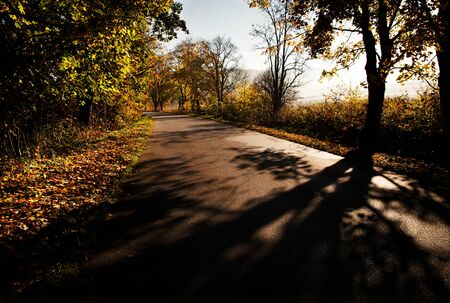 seasonal nature background Autumn on the morning road Banco de Imagens