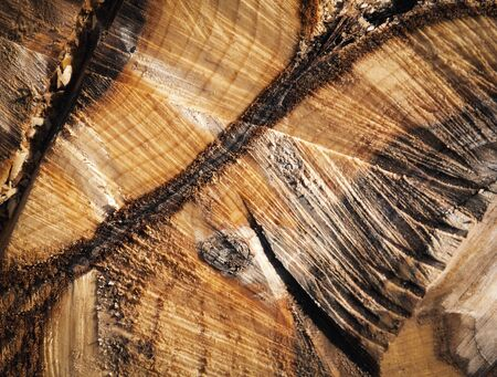 abstract background or texture detail by sawing willow stump