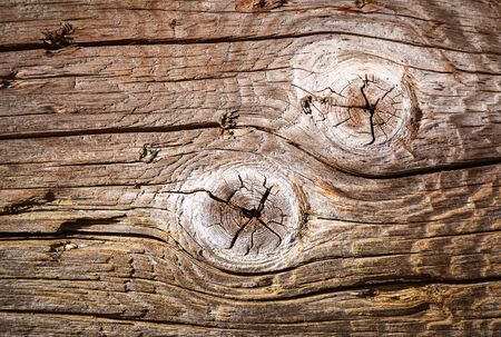 detail background Two knot on the old tree wood 写真素材