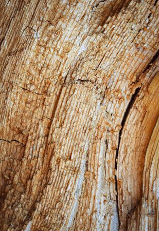 abstract background or texture Detail of rotten spruce wood