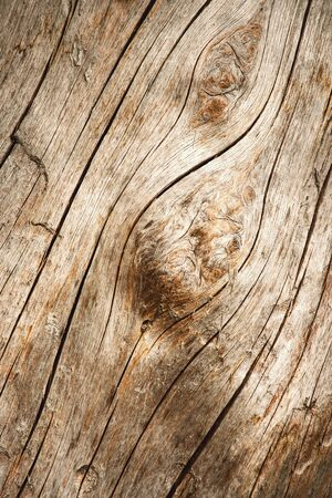 abstract background detail line on wood without bark 写真素材