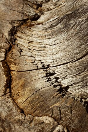 background or texture Detail of old weathered  brown wood 写真素材