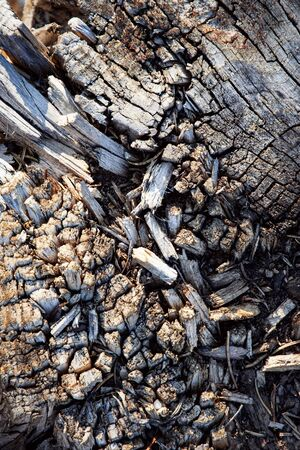 abstract background or texture Detail of old dry broken wood 写真素材