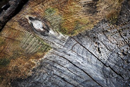 background or texture abstract paint on a detail of a wooden stump 写真素材