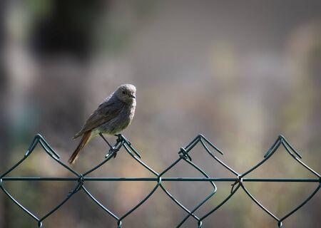 nature background little bird sitting on a wire fence