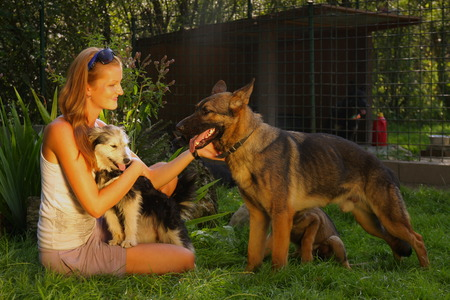 stroking: A young beautiful woman with blonde hair is stroking a german shepperd dog in a backyard with green grass