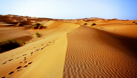 transcendent: A moroccan desert scenery composed of sand dunes spreading to the horizon and some occasional footsteps