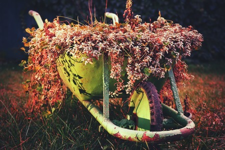 trundle: A green rustic wheelbarrow full of colorful flowers on a grass lawn red variant