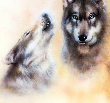 wolves: Pair of wolves
