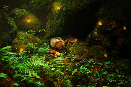willing: Germany sleeping  Sheep-dog laying on the stone with with yellow butterflies in beautiful forest light.