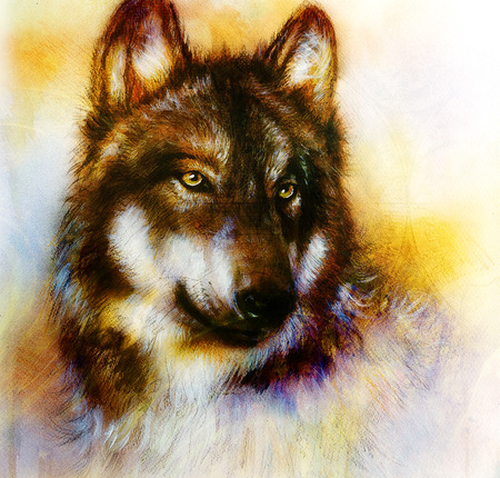 gray wolf: Wolf painting, color  background on paper , multicolor illustration. Stock Photo