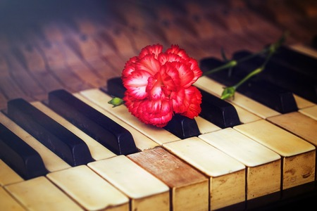 piano closeup: Old vintage gand piano keys with a red carnation flower, vintage picture. music concept