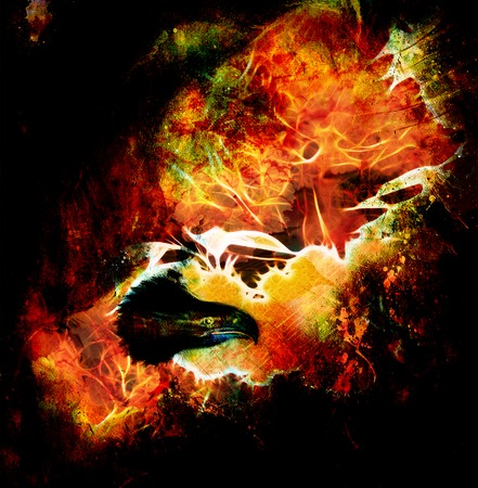 marvelous: fenix in fire  on an abstract background, color with spot structures.
