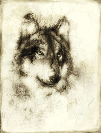 Illustration Portrait of a Wolf, crackle background. vintage picture Stock Photo