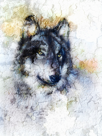 wolves: Illustration Portrait of a Wolf, crackle background. Stock Photo