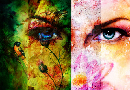 eye contact: Color abstract background with birds and flower and  blue eye. Eye contact