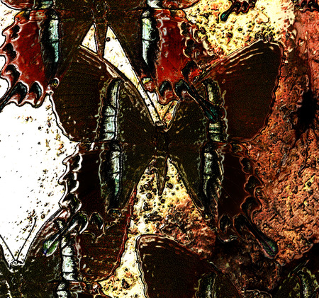 metal structure: illustration of butterfly. mixed media. metal structure effect.