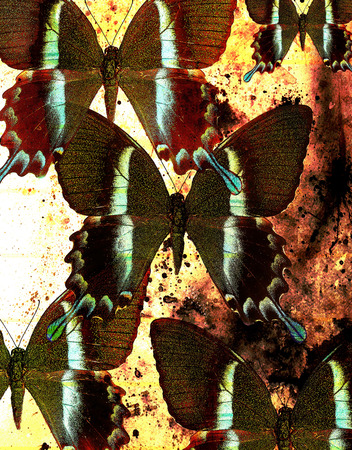 medium: illustration of a color butterfly, mixed medium, structure  background. Stock Photo