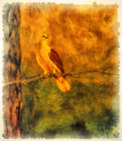 postproduction: dove in the forest. painting and postproduction in computer. Stock Photo