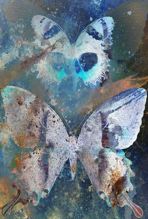 medium: illustration of a  color butterfly, mixed medium, Stock Photo