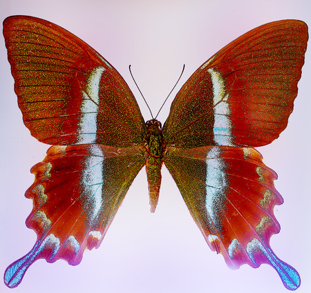 gift of hope: illustration of a color butterfly,  mixed medium, black background