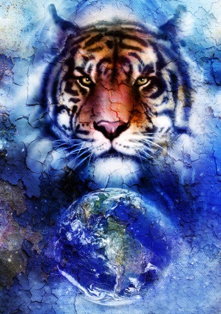 crackle: painting  tiger on color cosmic space background, wildlife animals. With Earth and stars, Crackle effect