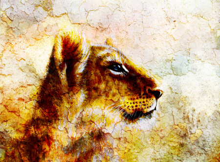 crackle: Little lion cub head. animal painting on vintage paper, abstract color background with spots and crackle