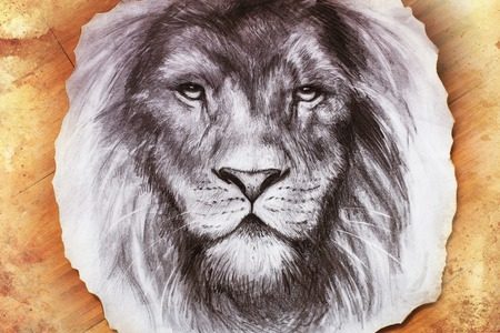 head of lion: Drawing of a lion head with a majestically peaceful expression on wood abstract background. eye contact