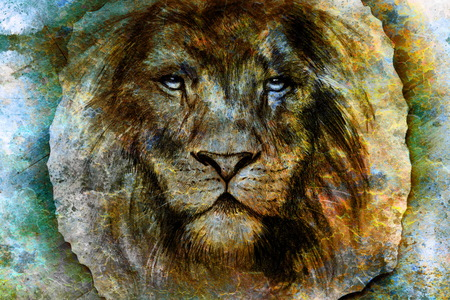 gazing: Drawing of a lion head with a majestically peaceful expression on wood abstract background. eye contact