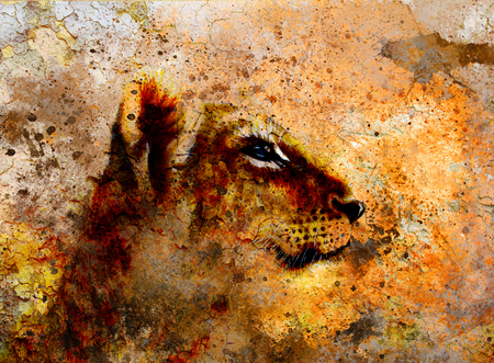 animal hair: Little lion cub head. animal painting on vintage paper, abstract color background with spots and crackle