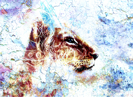 crackle: Little lion cub head. animal painting, abstract color background with ornaments and crackle. Stock Photo