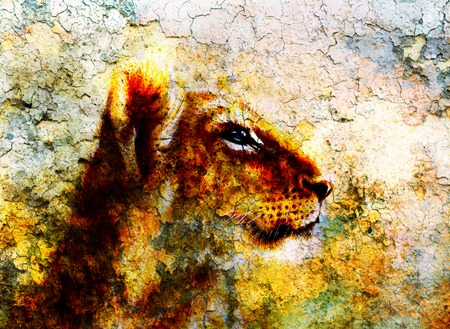 undomesticated: Little lion cub head. animal painting on vintage paper, abstract color background with spots and crackle